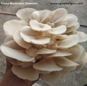 mushroom ki kheti